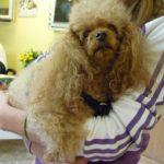 Fellpflege und professionelle Tierfrisur