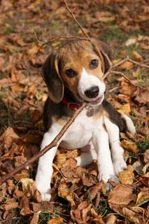 Hund im Wald © Bild: sxc.hu