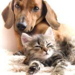 Gefährliche Impfmüdigkeit in der Tierarztpraxis