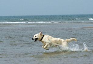 Hund am Meer, Quelle: sxc.hu, bretz