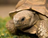 Portrait einer Schildkröte